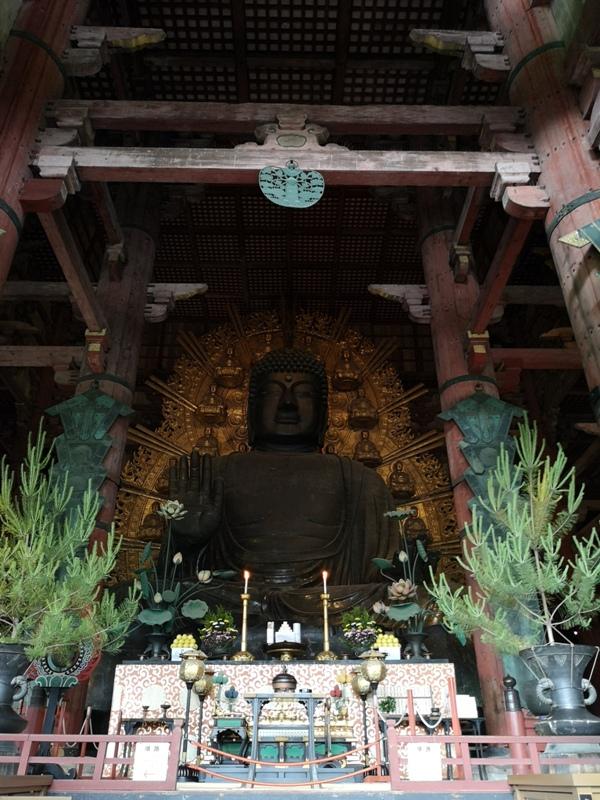 todaiji09 Nara-奈良小旅遊 世界文化遺產 東大寺&春日大社 搶食仙貝的小鹿亂撞