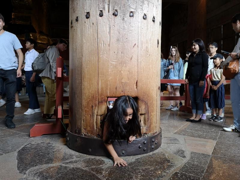 todaiji19 Nara-奈良小旅遊 世界文化遺產 東大寺&春日大社 搶食仙貝的小鹿亂撞