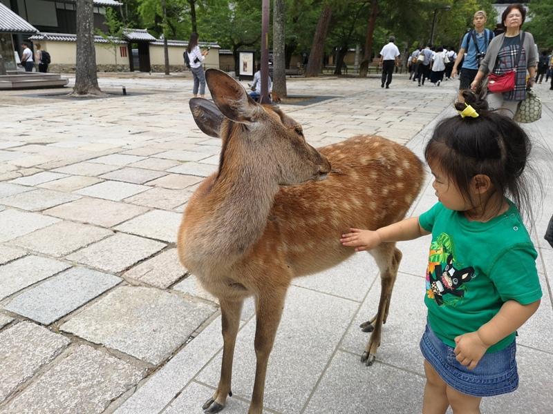 todaiji32 Nara-奈良小旅遊 世界文化遺產 東大寺&春日大社 搶食仙貝的小鹿亂撞