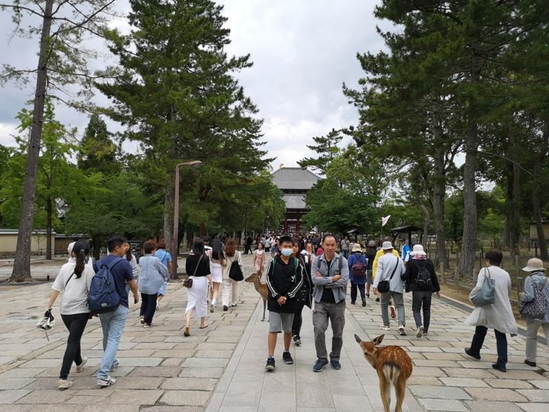 todaiji33 Nara-奈良小旅遊 世界文化遺產 東大寺&春日大社 搶食仙貝的小鹿亂撞