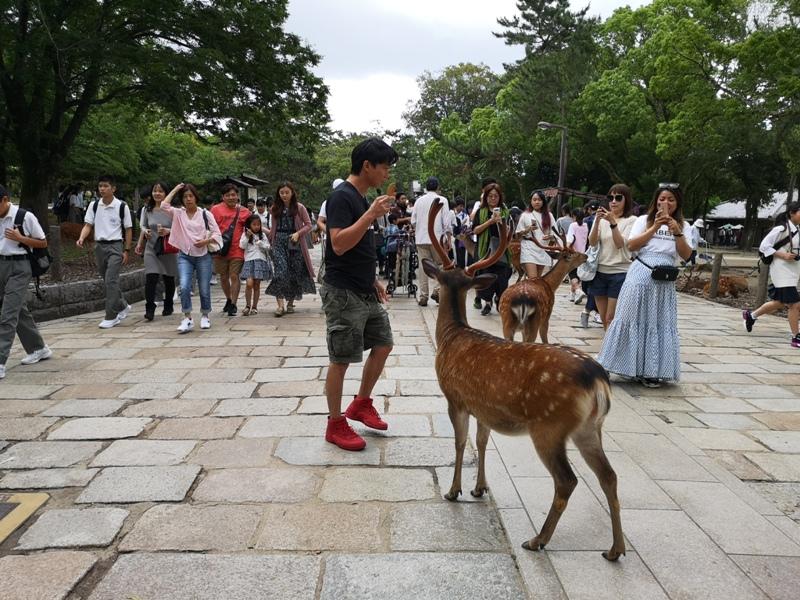todaiji34 Nara-奈良小旅遊 世界文化遺產 東大寺&春日大社 搶食仙貝的小鹿亂撞