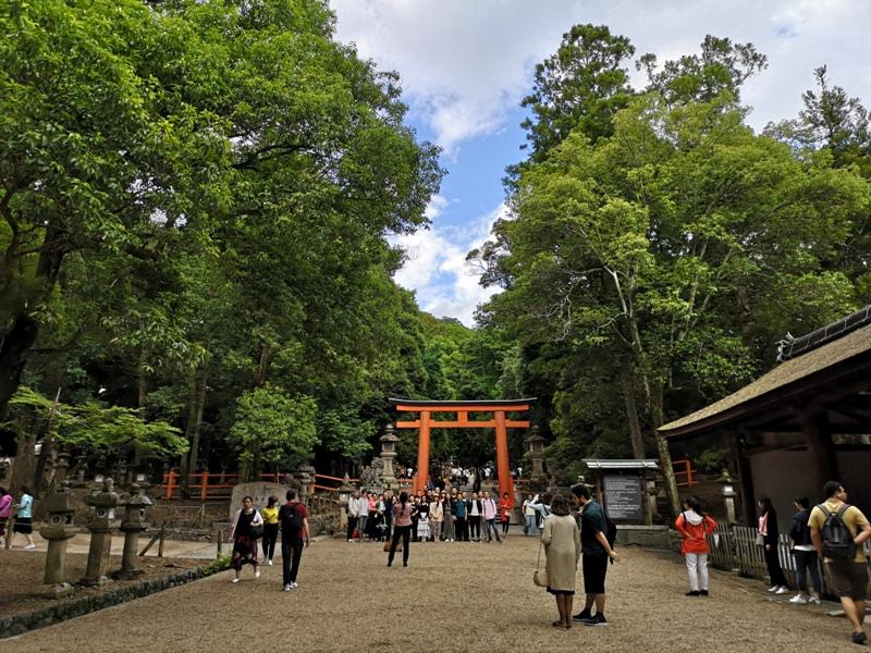 todaiji37 Nara-奈良小旅遊 世界文化遺產 東大寺&春日大社 搶食仙貝的小鹿亂撞