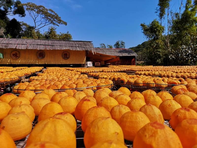 xinpu0118 新埔-味衛佳 北台灣秋天美麗的風景 好吃好玩好好拍的柿餅