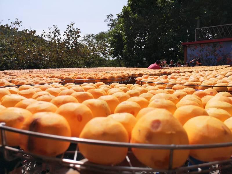 xinpu0121 新埔-味衛佳 北台灣秋天美麗的風景 好吃好玩好好拍的柿餅