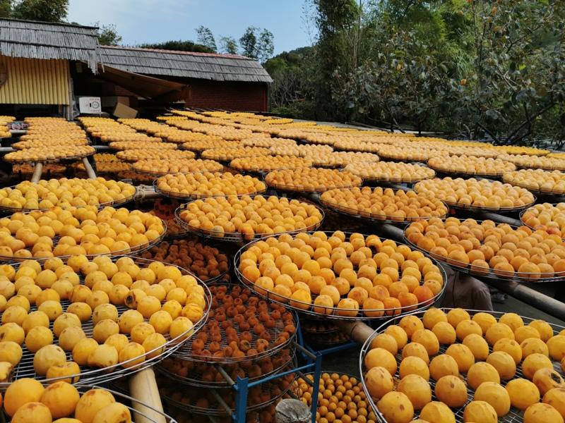 xinpu0123 新埔-味衛佳 北台灣秋天美麗的風景 好吃好玩好好拍的柿餅