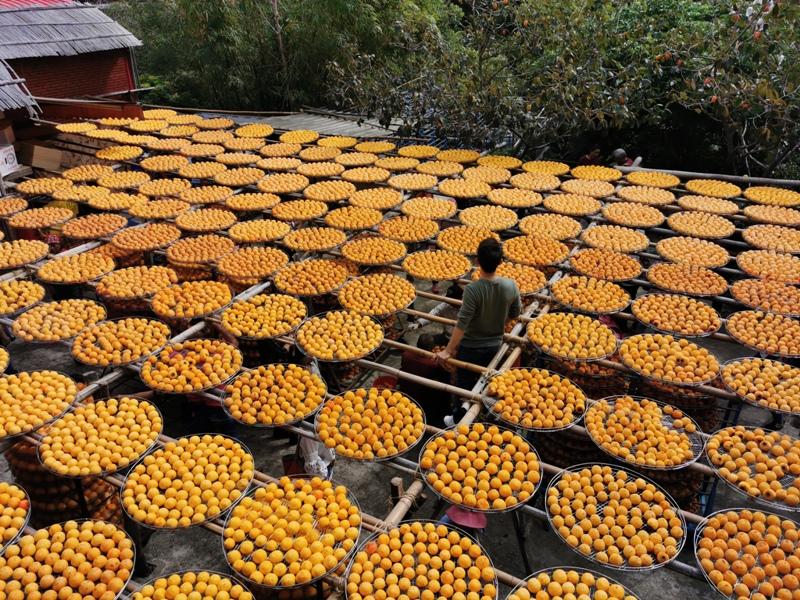 xinpu0124 新埔-味衛佳 北台灣秋天美麗的風景 好吃好玩好好拍的柿餅