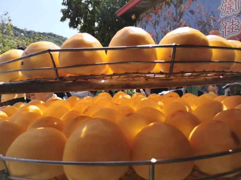 xinpu0125 新埔-味衛佳 北台灣秋天美麗的風景 好吃好玩好好拍的柿餅