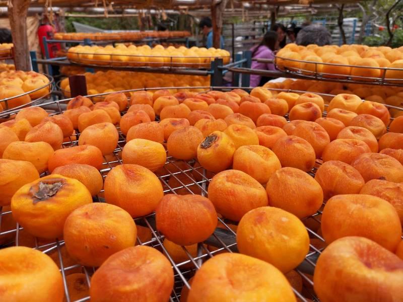 xinpu0130 新埔-味衛佳 北台灣秋天美麗的風景 好吃好玩好好拍的柿餅