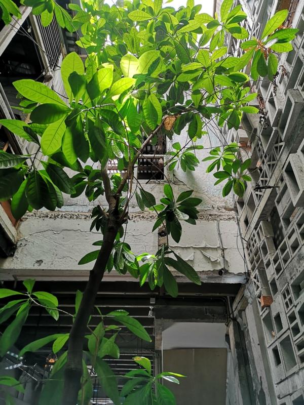 leafco15 Kuala Lumpur-Leaf & Co. Cafe老屋風情 茨廠街旁老屋咖啡