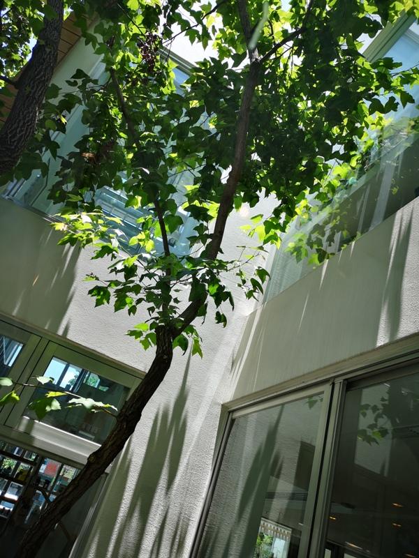 mojocoffee18 台中西區-The Factory Mojocoffee咖啡名店 靜巷內的優雅舒適