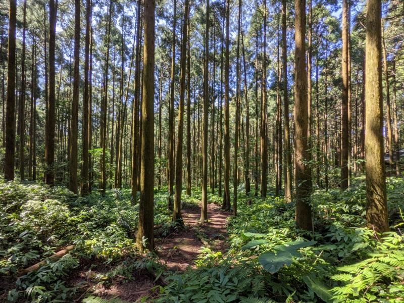 guanxi06 關西-馬武督探索森林(綠光森林) 風和日麗輕鬆走步道