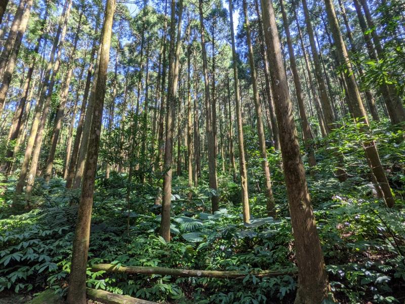 guanxi07 關西-馬武督探索森林(綠光森林) 風和日麗輕鬆走步道