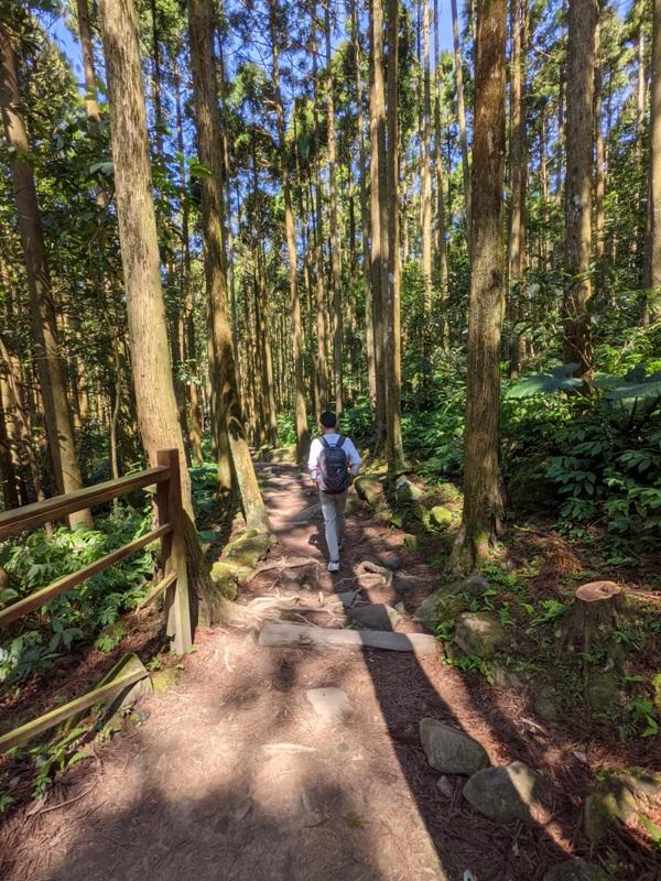 guanxi08 關西-馬武督探索森林(綠光森林) 風和日麗輕鬆走步道