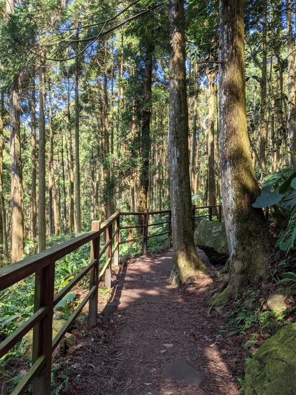 guanxi09 關西-馬武督探索森林(綠光森林) 風和日麗輕鬆走步道