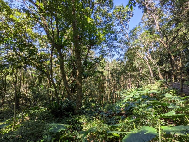guanxi10 關西-馬武督探索森林(綠光森林) 風和日麗輕鬆走步道
