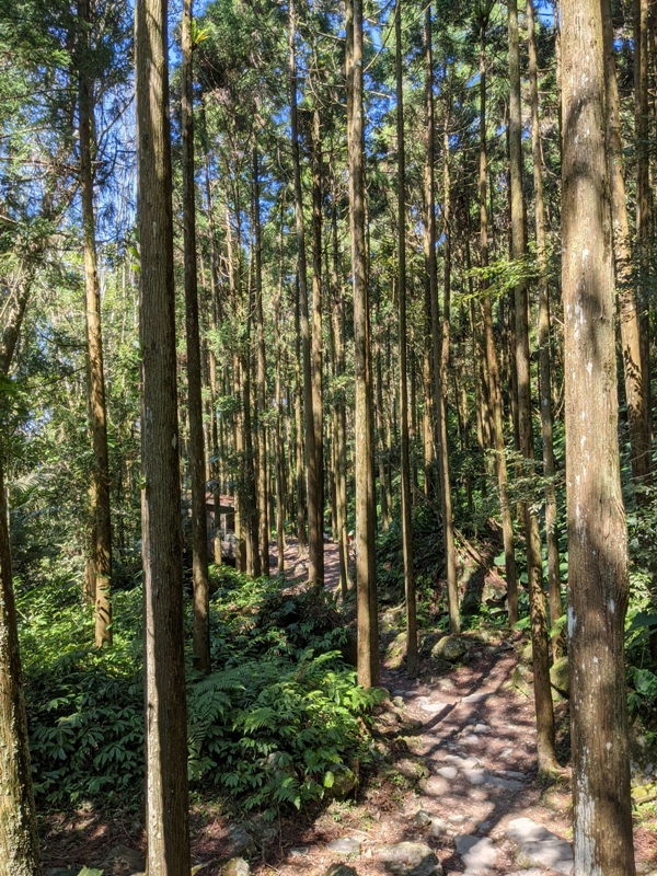 guanxi11 關西-馬武督探索森林(綠光森林) 風和日麗輕鬆走步道