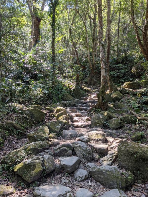 guanxi13 關西-馬武督探索森林(綠光森林) 風和日麗輕鬆走步道