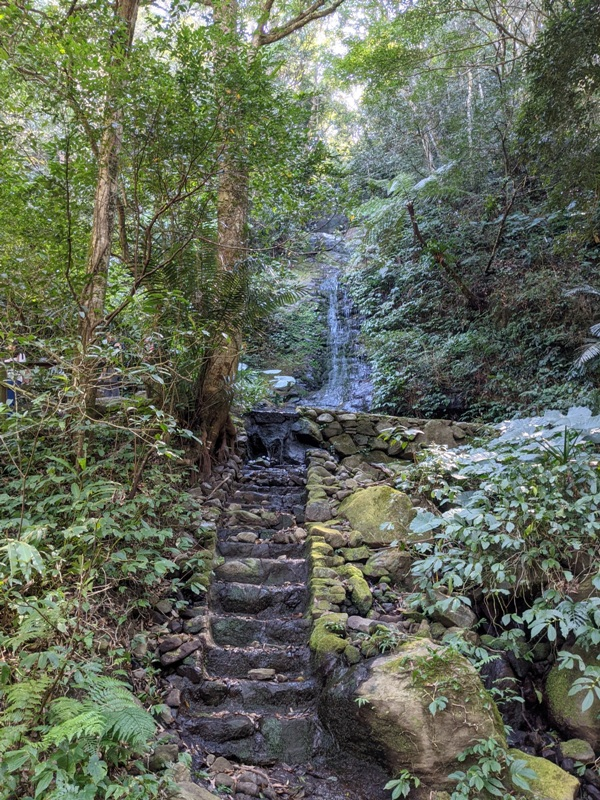 guanxi15 關西-馬武督探索森林(綠光森林) 風和日麗輕鬆走步道