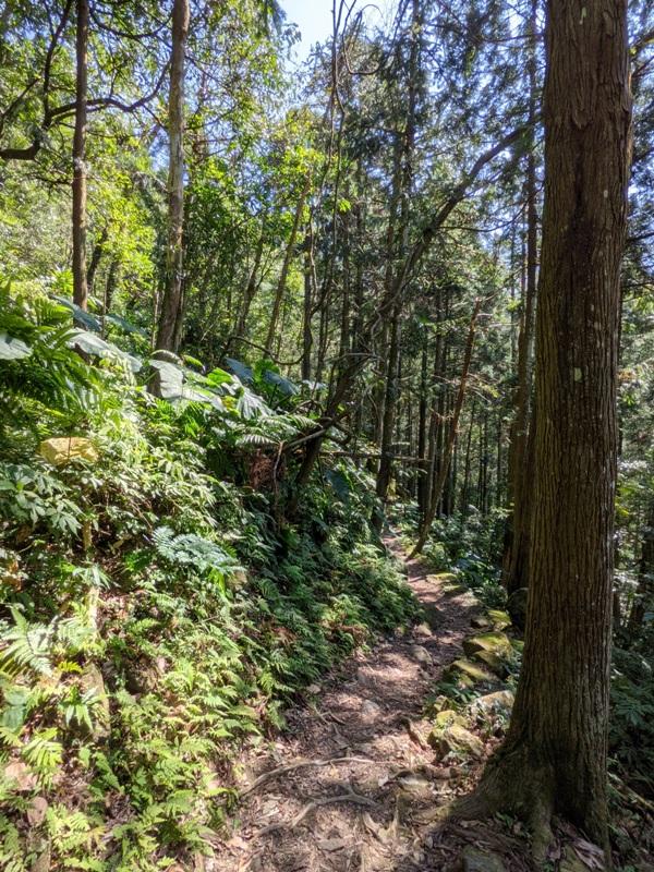 guanxi20 關西-馬武督探索森林(綠光森林) 風和日麗輕鬆走步道