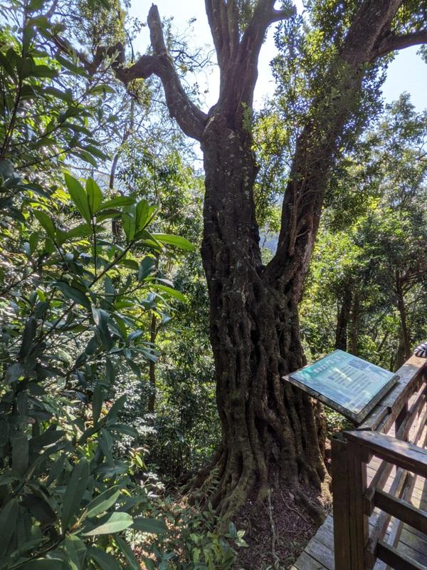 guanxi23 關西-馬武督探索森林(綠光森林) 風和日麗輕鬆走步道