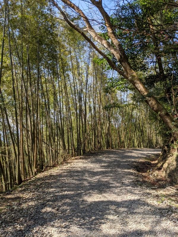 guanxi26 關西-馬武督探索森林(綠光森林) 風和日麗輕鬆走步道