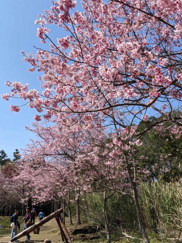 guanxi29 關西-馬武督探索森林(綠光森林) 風和日麗輕鬆走步道