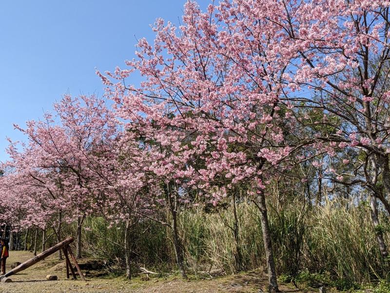 guanxi32 關西-馬武督探索森林(綠光森林) 風和日麗輕鬆走步道