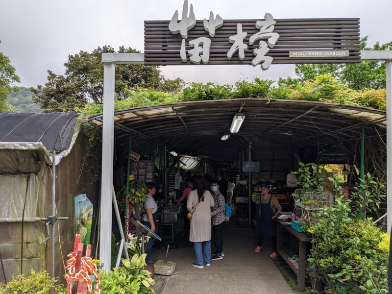 chuzihumapp08 陽明山-竹子湖 春天最美的白色浪漫 滿山谷的海芋香