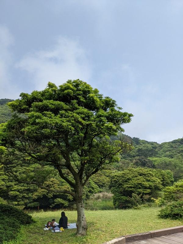 datung01 陽明山-大屯山 芒草箭竹 捕捉美麗的雲海