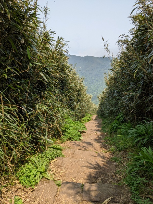 datung25 陽明山-大屯山 芒草箭竹 捕捉美麗的雲海