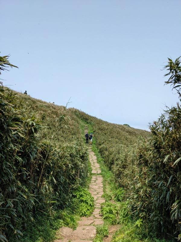 datung29 陽明山-大屯山 芒草箭竹 捕捉美麗的雲海
