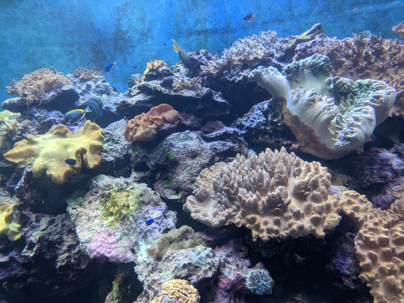 aquarium03 車城-海生館  艷陽天最好去處 吹冷氣賞鯨豚 感受海底風情