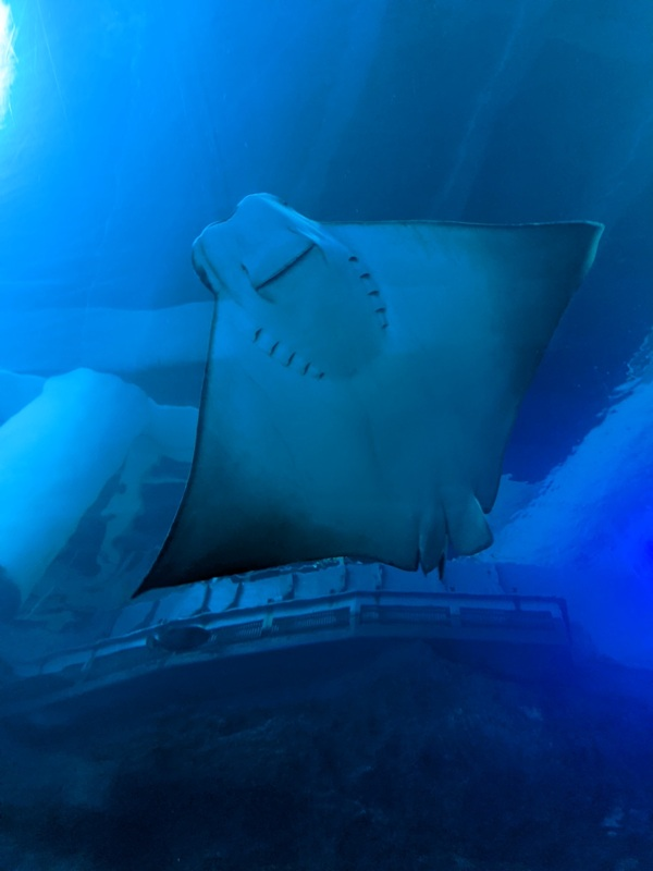 aquarium08 車城-海生館  艷陽天最好去處 吹冷氣賞鯨豚 感受海底風情
