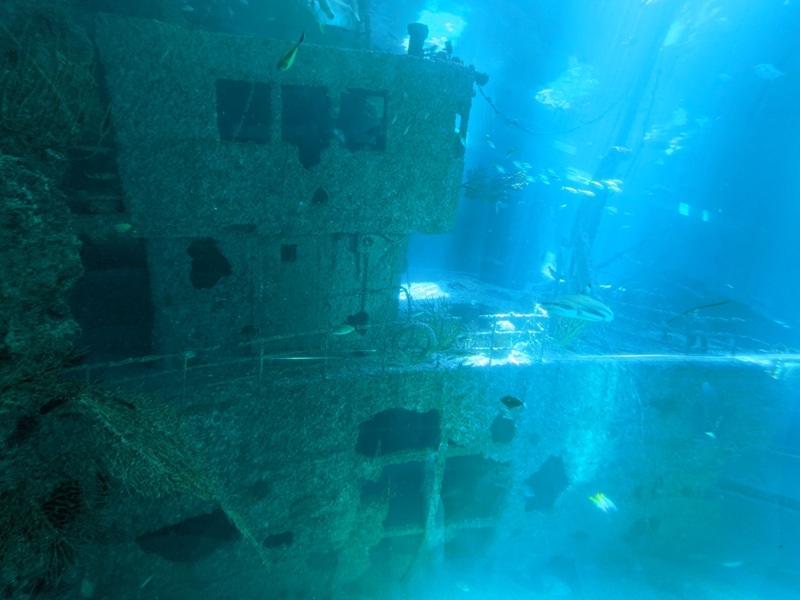 aquarium09 車城-海生館  艷陽天最好去處 吹冷氣賞鯨豚 感受海底風情