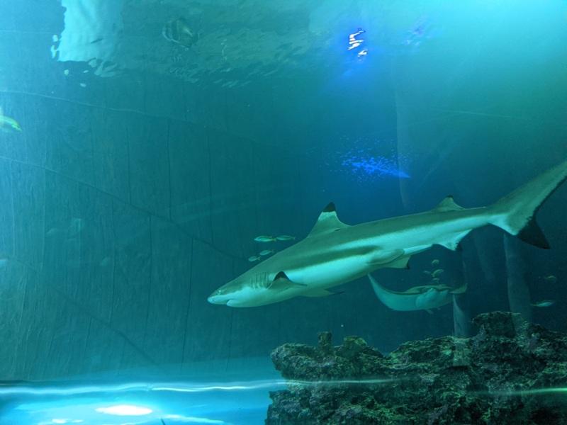 aquarium10 車城-海生館  艷陽天最好去處 吹冷氣賞鯨豚 感受海底風情