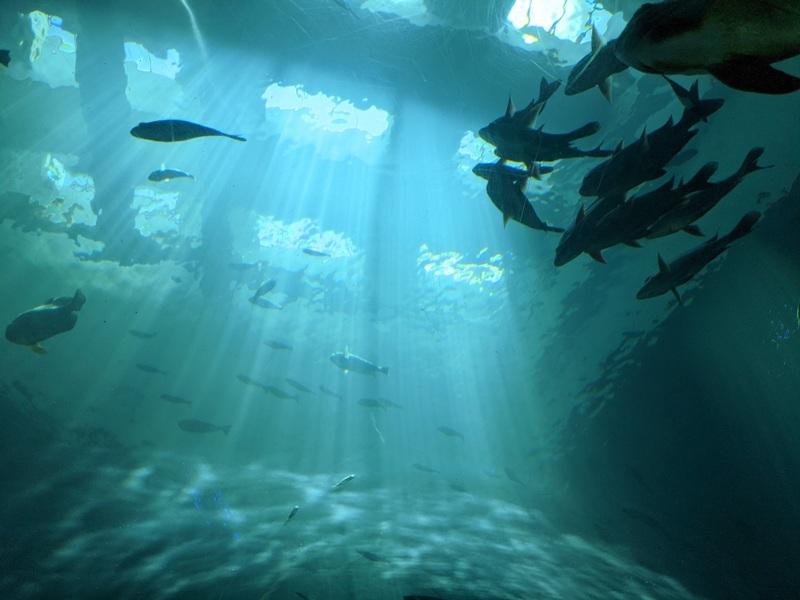 aquarium11 車城-海生館  艷陽天最好去處 吹冷氣賞鯨豚 感受海底風情