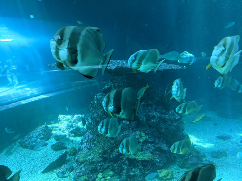 aquarium13 車城-海生館  艷陽天最好去處 吹冷氣賞鯨豚 感受海底風情