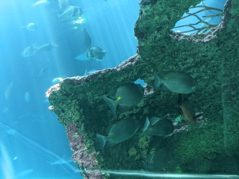 aquarium14 車城-海生館  艷陽天最好去處 吹冷氣賞鯨豚 感受海底風情