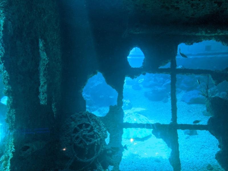 aquarium15 車城-海生館  艷陽天最好去處 吹冷氣賞鯨豚 感受海底風情