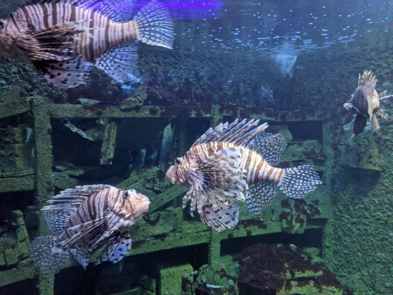 aquarium16 車城-海生館  艷陽天最好去處 吹冷氣賞鯨豚 感受海底風情