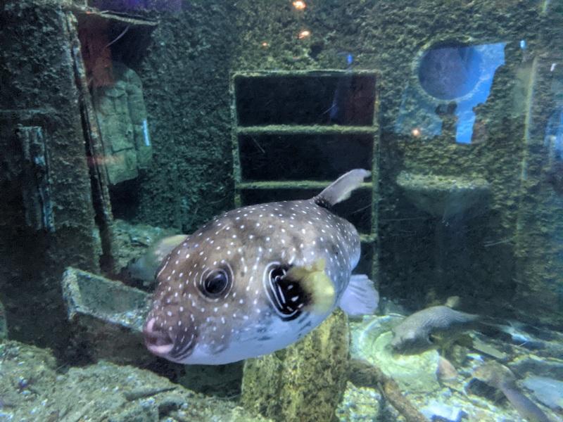aquarium18 車城-海生館  艷陽天最好去處 吹冷氣賞鯨豚 感受海底風情
