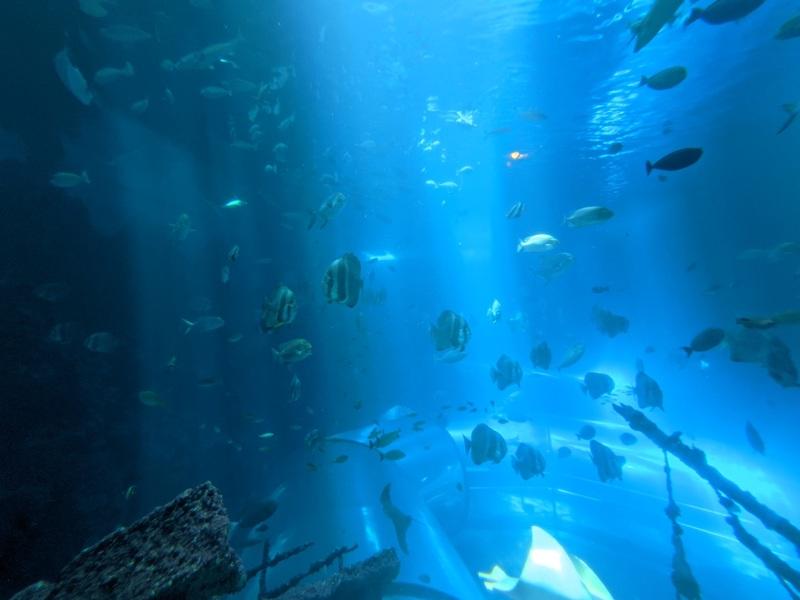 aquarium19 車城-海生館  艷陽天最好去處 吹冷氣賞鯨豚 感受海底風情