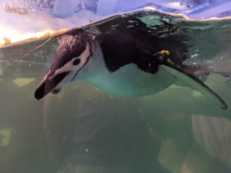 aquarium28 車城-海生館  艷陽天最好去處 吹冷氣賞鯨豚 感受海底風情