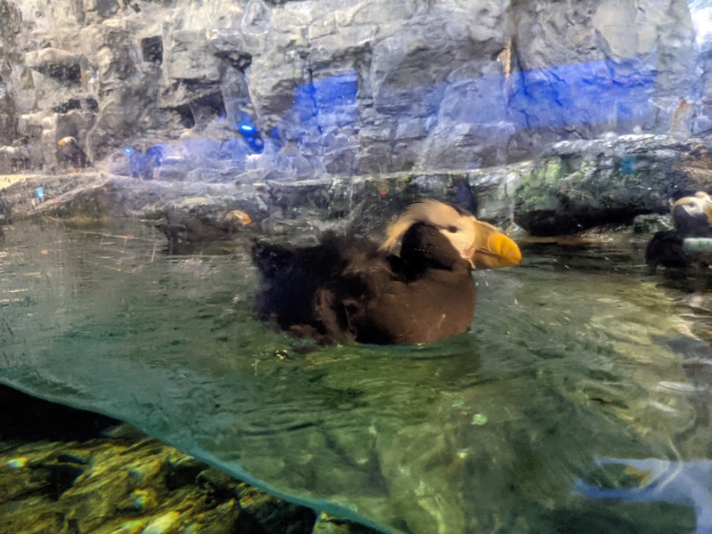 aquarium31 車城-海生館  艷陽天最好去處 吹冷氣賞鯨豚 感受海底風情