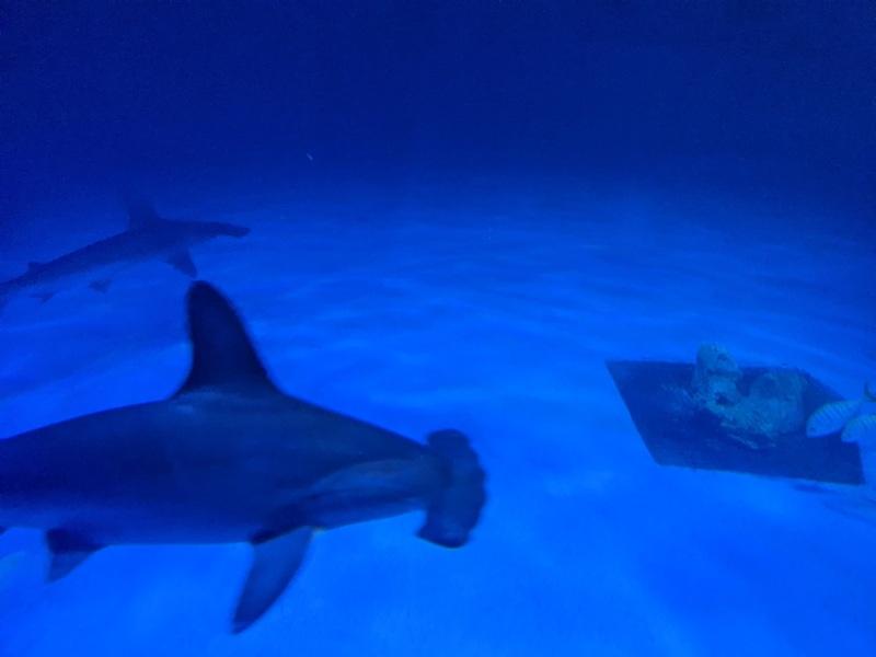 aquarium32 車城-海生館  艷陽天最好去處 吹冷氣賞鯨豚 感受海底風情