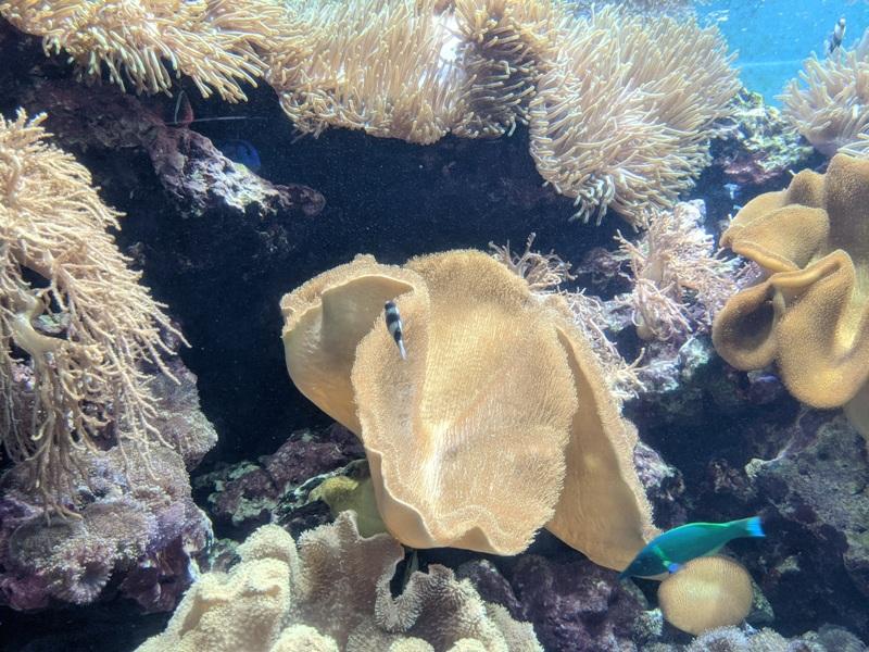 aquarium36 車城-海生館  艷陽天最好去處 吹冷氣賞鯨豚 感受海底風情