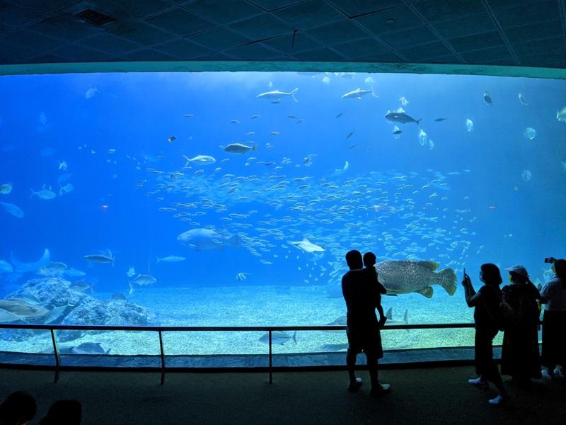 aquarium37 車城-海生館  艷陽天最好去處 吹冷氣賞鯨豚 感受海底風情