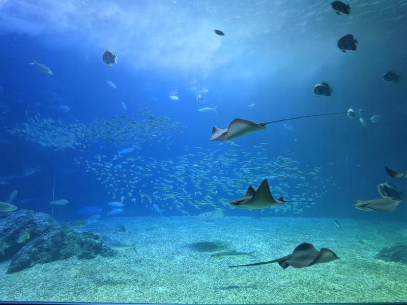 aquarium40 車城-海生館  艷陽天最好去處 吹冷氣賞鯨豚 感受海底風情