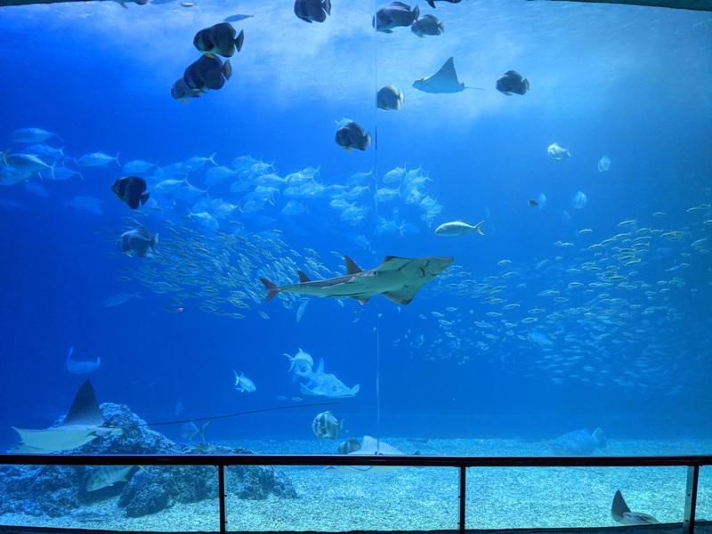 aquarium41 車城-海生館  艷陽天最好去處 吹冷氣賞鯨豚 感受海底風情