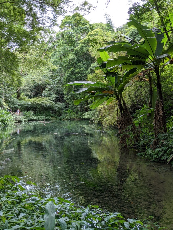 42feng01 南庄-四十二份湧泉自然生態步道 清爽宜人小秘境
